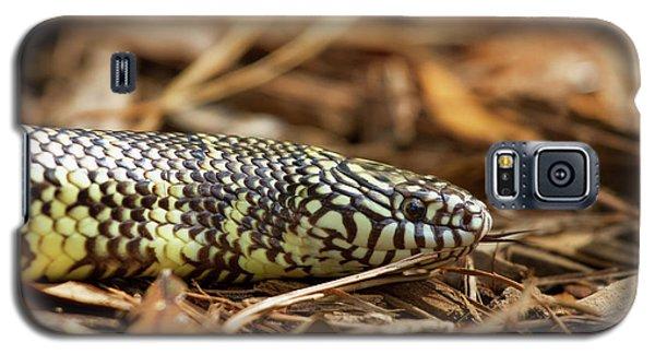 King Snake 1 Galaxy S5 Case by Arthur Dodd