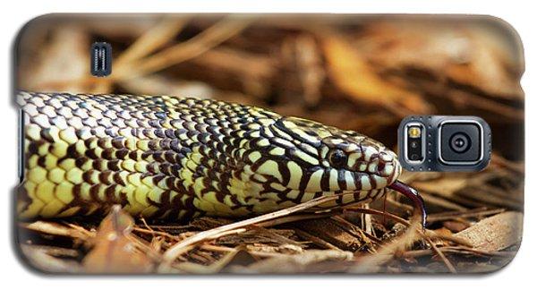 King Snake 2 Galaxy S5 Case by Arthur Dodd
