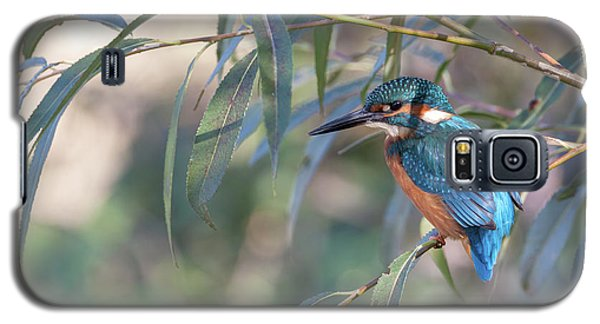 Kingfisher In Willow Galaxy S5 Case