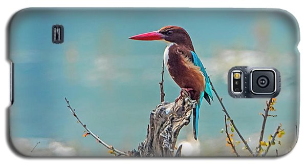 Kingfisher On A Stump Galaxy S5 Case by Pravine Chester