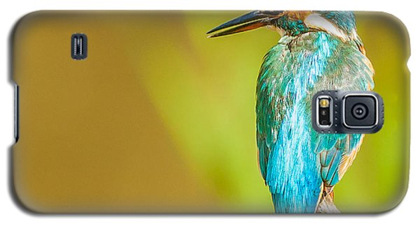 Kingfisher Galaxy S5 Case by Paul Neville