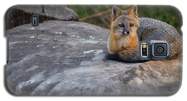 Kingpin Galaxy S5 Case