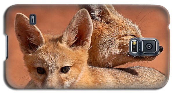 Kit Fox Pup Snuggling With Mother Galaxy S5 Case by Max Allen