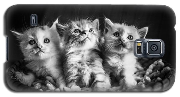 Kitten Trio Galaxy S5 Case