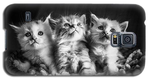 Kitten Trio Galaxy S5 Case