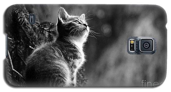 Kitten In The Tree Galaxy S5 Case