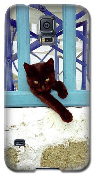 Kitten With Blue Rail Galaxy S5 Case