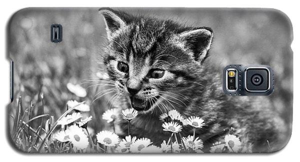 Kitten With Daisy's Galaxy S5 Case