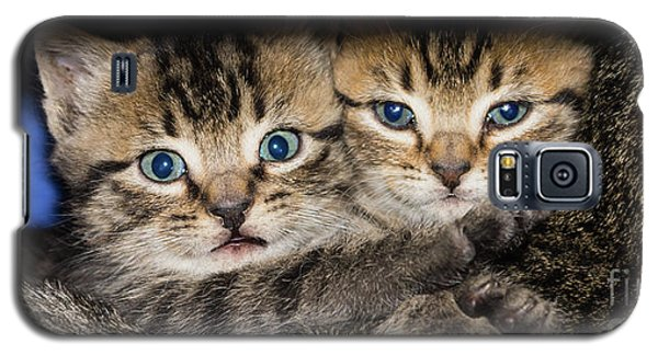 Kittens In The Shadow Galaxy S5 Case