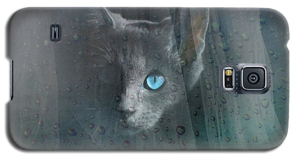 Galaxy S5 Case featuring the photograph Kitty At The Window by Chris Armytage
