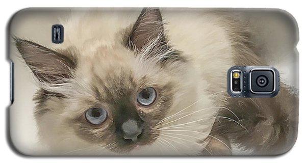 Kitty Blue Eyes Galaxy S5 Case