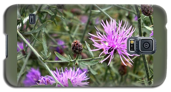 Galaxy S5 Case featuring the photograph Knapweed by Danielle R T Haney