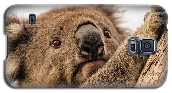 Koala 3 Galaxy S5 Case