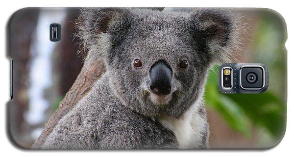 Koala Bear 7 Galaxy S5 Case by Gary Crockett