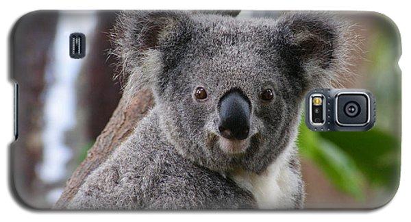 Koala Bear 7 Galaxy S5 Case
