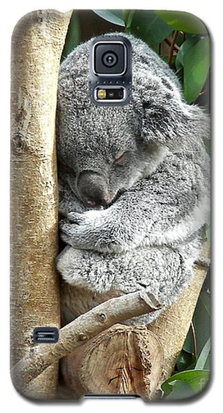 Koala Galaxy S5 Case by Carol  Bradley