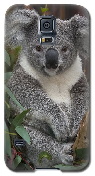 Koala Phascolarctos Cinereus Galaxy S5 Case by Zssd