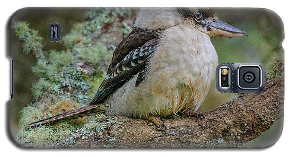 Kookaburra 4 Galaxy S5 Case