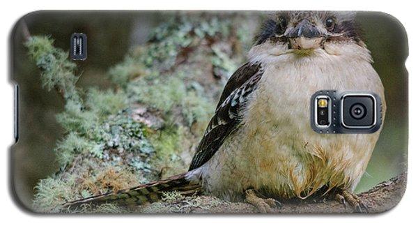 Kookaburra 3 Galaxy S5 Case