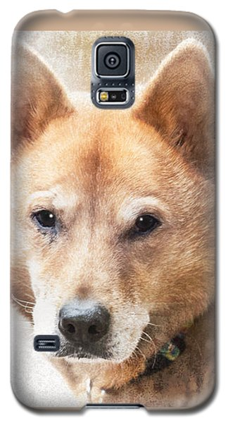Korean Jindo Portrait Galaxy S5 Case by Eleanor Abramson