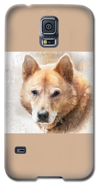 Galaxy S5 Case featuring the photograph Korean Jindo Portrait by Eleanor Abramson