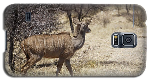 Galaxy S5 Case featuring the photograph Kudu Crossing by Ernie Echols