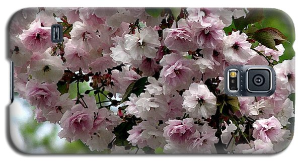 Japanese Cherry Tree Blossoms Highland Park Rochester Ny Watercolor Effect Galaxy S5 Case