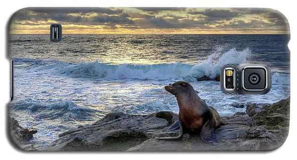 La Jolla Sea Lion Galaxy S5 Case by Eddie Yerkish