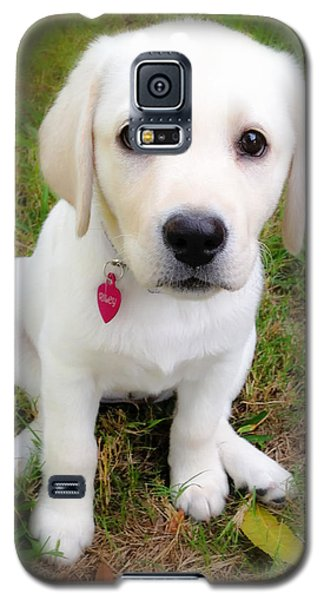Galaxy S5 Case featuring the photograph Lab Puppy by Stephen Anderson