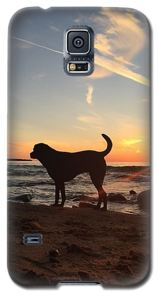 Galaxy S5 Case featuring the photograph Labrador Dreams by Paula Brown
