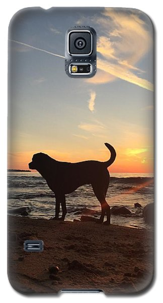 Labrador Dreams Galaxy S5 Case by Paula Brown
