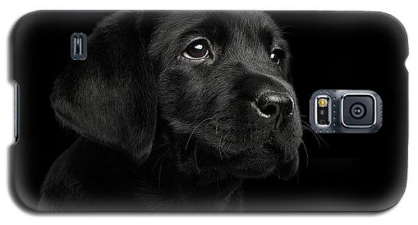 Labrador Retriever Puppy Isolated On Black Background Galaxy S5 Case