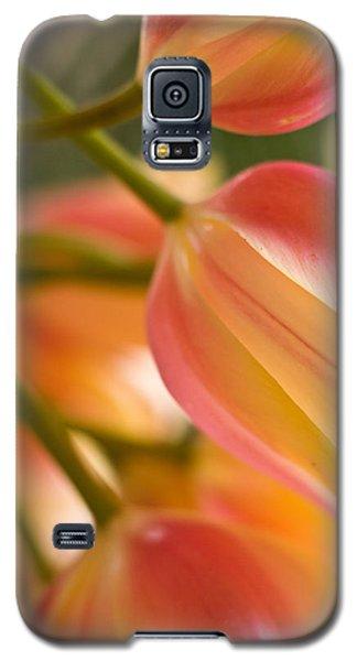 Labrynth Of Spring Galaxy S5 Case