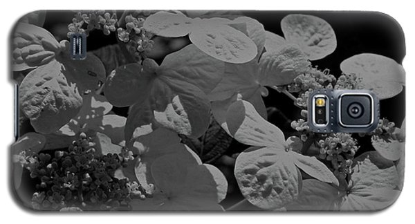 Galaxy S5 Case featuring the photograph Lace Cap Hydrangea In Black And White by Smilin Eyes  Treasures