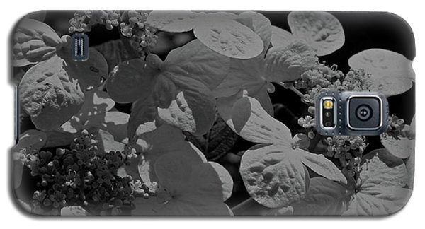 Lace Cap Hydrangea In Black And White Galaxy S5 Case by Smilin Eyes  Treasures