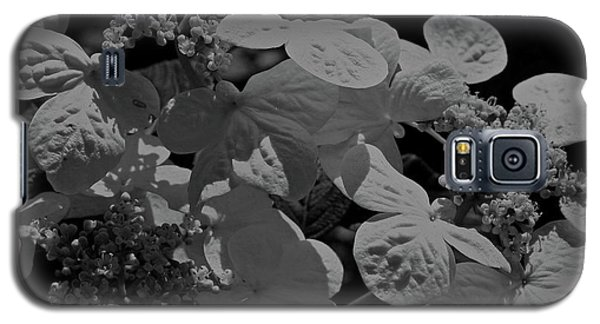 Lace Cap Hydrangea In Black And White Galaxy S5 Case