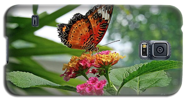 Lacewing Butterfly Galaxy S5 Case