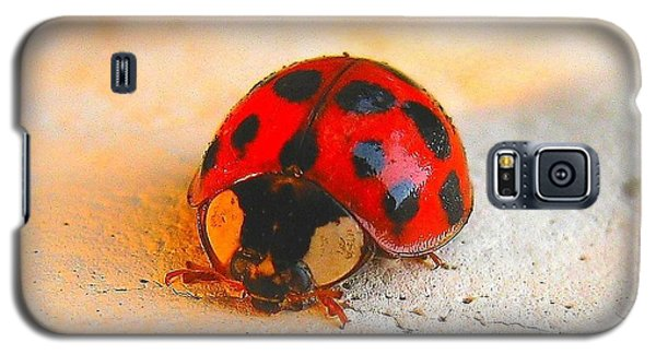 Galaxy S5 Case featuring the photograph Lady Bug 2 by John King