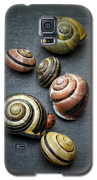 Lady Bug And Snail Shells 1 Galaxy S5 Case by Karen Stahlros