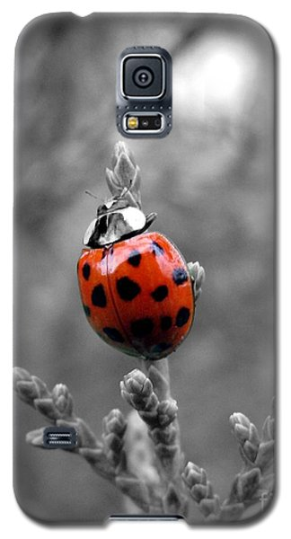 Galaxy S5 Case featuring the photograph Lady Bug by Misha Bean