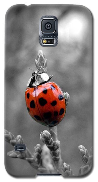 Lady Bug Galaxy S5 Case