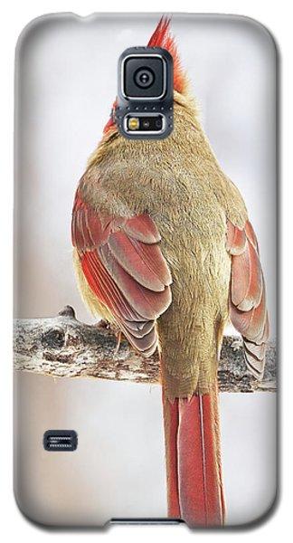 Lady Cardinal Acting Shy Galaxy S5 Case