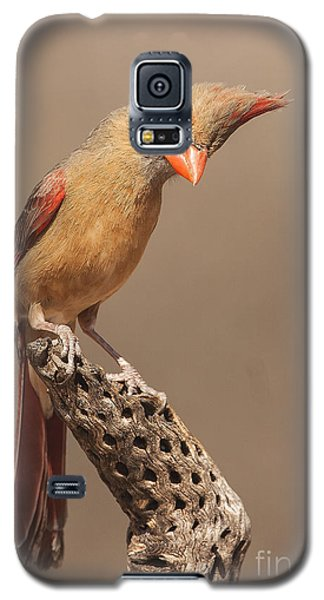 Lady Cardinal And Cholla Galaxy S5 Case