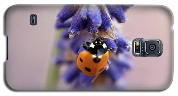 Ladybird On Norfolk Lavender  #norfolk Galaxy S5 Case by John Edwards
