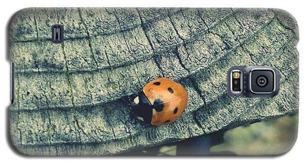 Ladybird Galaxy S5 Case