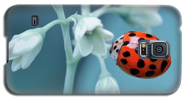 Galaxy S5 Case featuring the photograph Ladybug by Mark Fuller