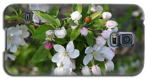 Ladybug On Cherry Blossoms Galaxy S5 Case