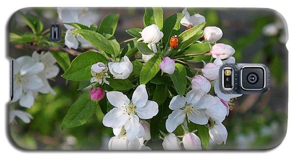 Ladybug On Cherry Blossoms Galaxy S5 Case