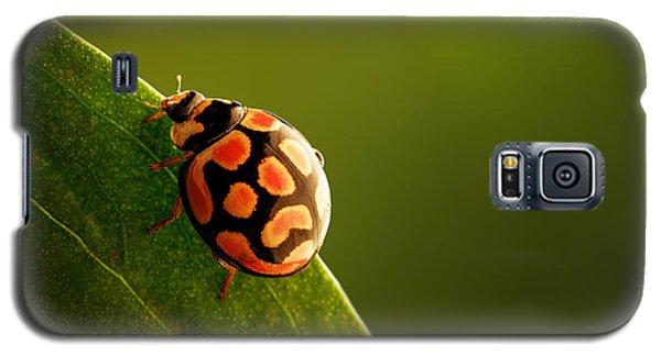 Ladybug  On Green Leaf Galaxy S5 Case by Johan Swanepoel