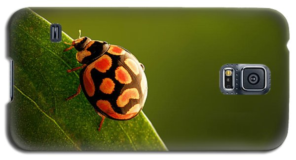 Ladybug  On Green Leaf Galaxy S5 Case